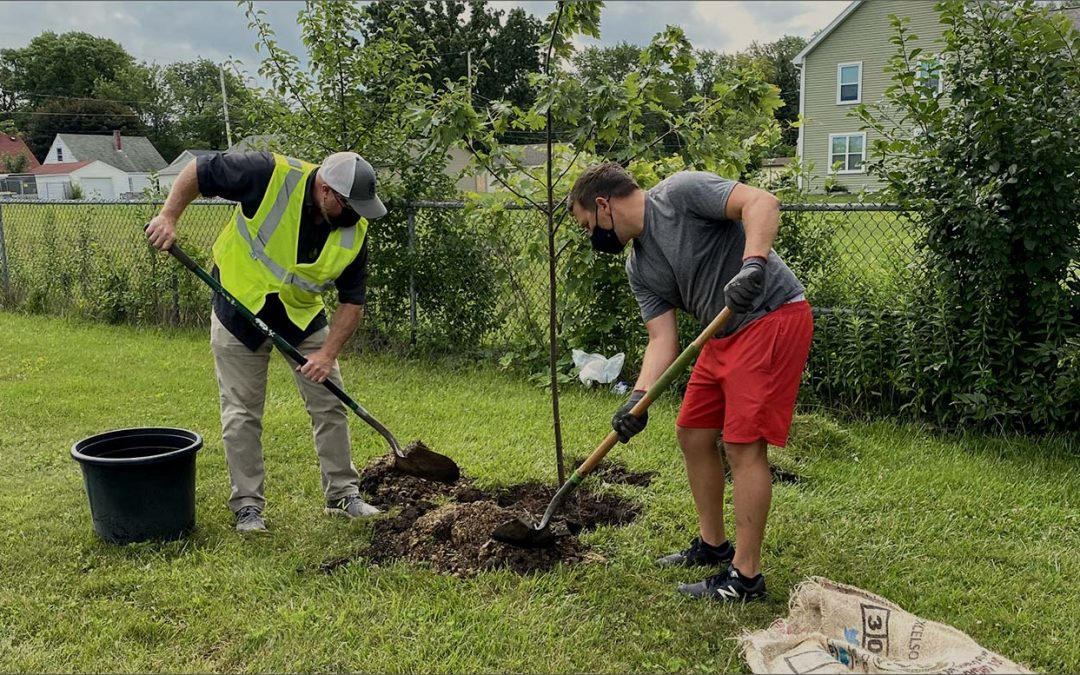 A partnership working to improve our Neighborhood one tree at a time.